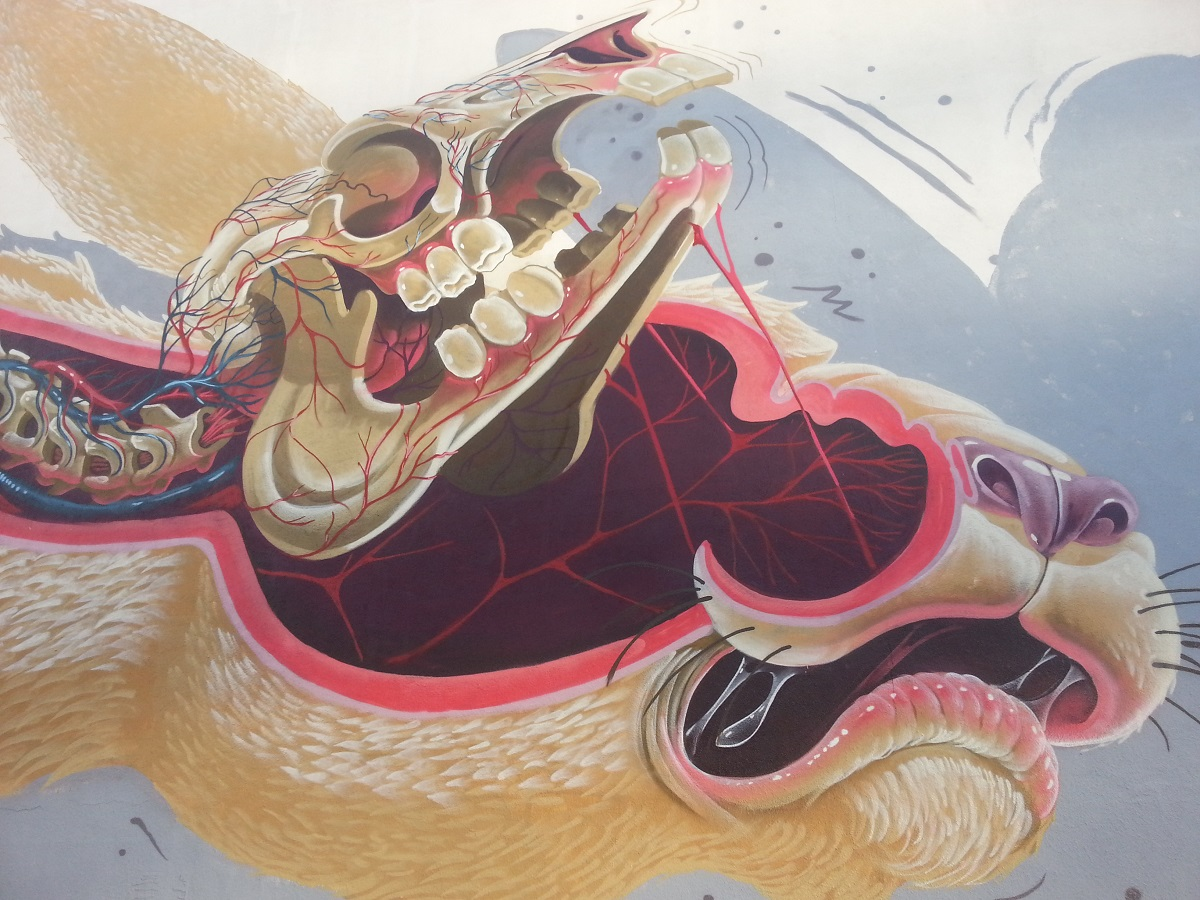 nychos-easter-rabbit-new-mural-in-san-francisco-02