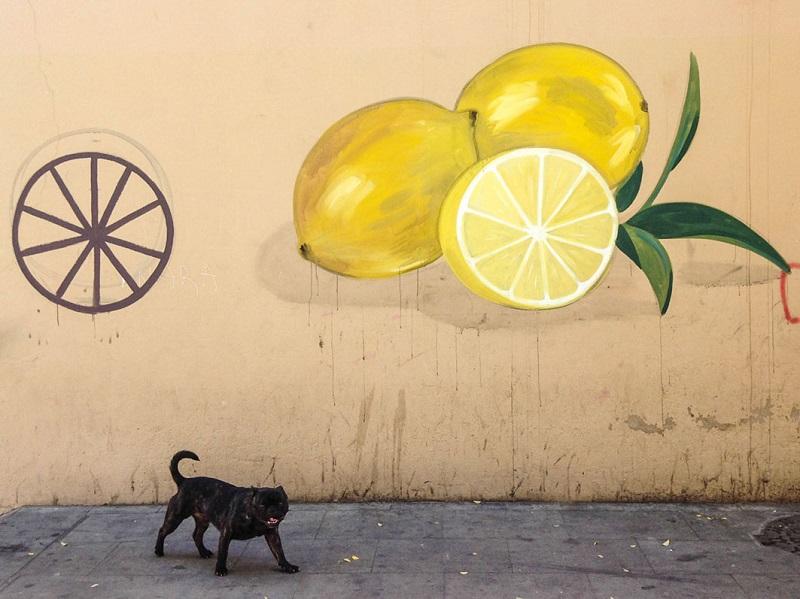 escif-new-murals-in-font-de-la-polvora-girona-07